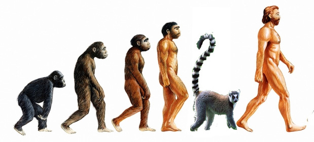 the new missing link