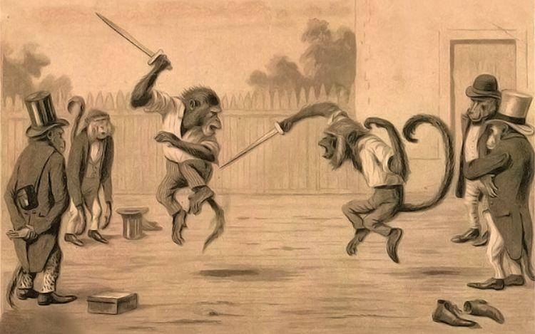 funny-monkey-fight